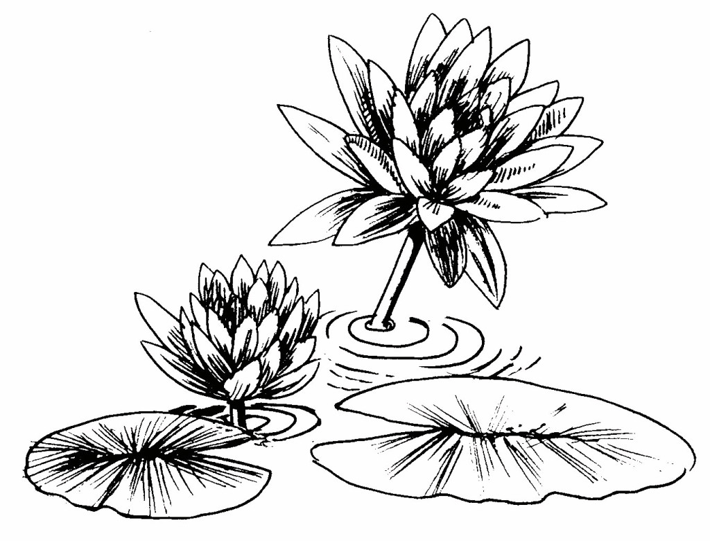 lily diagram printable simple plot free coloring pages of frog lilypad