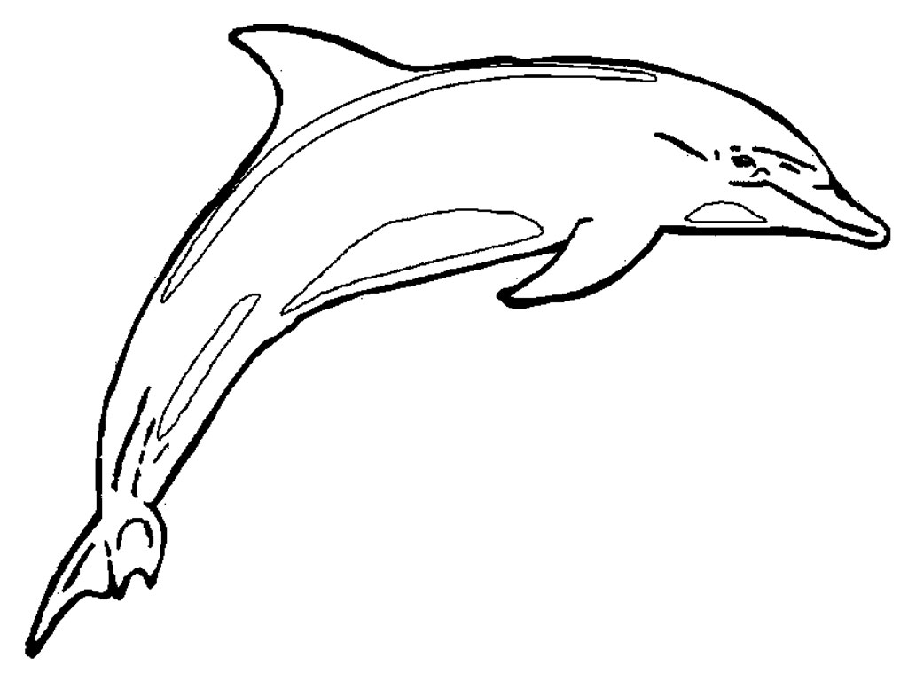 Printable Dolphin Coloring Pages