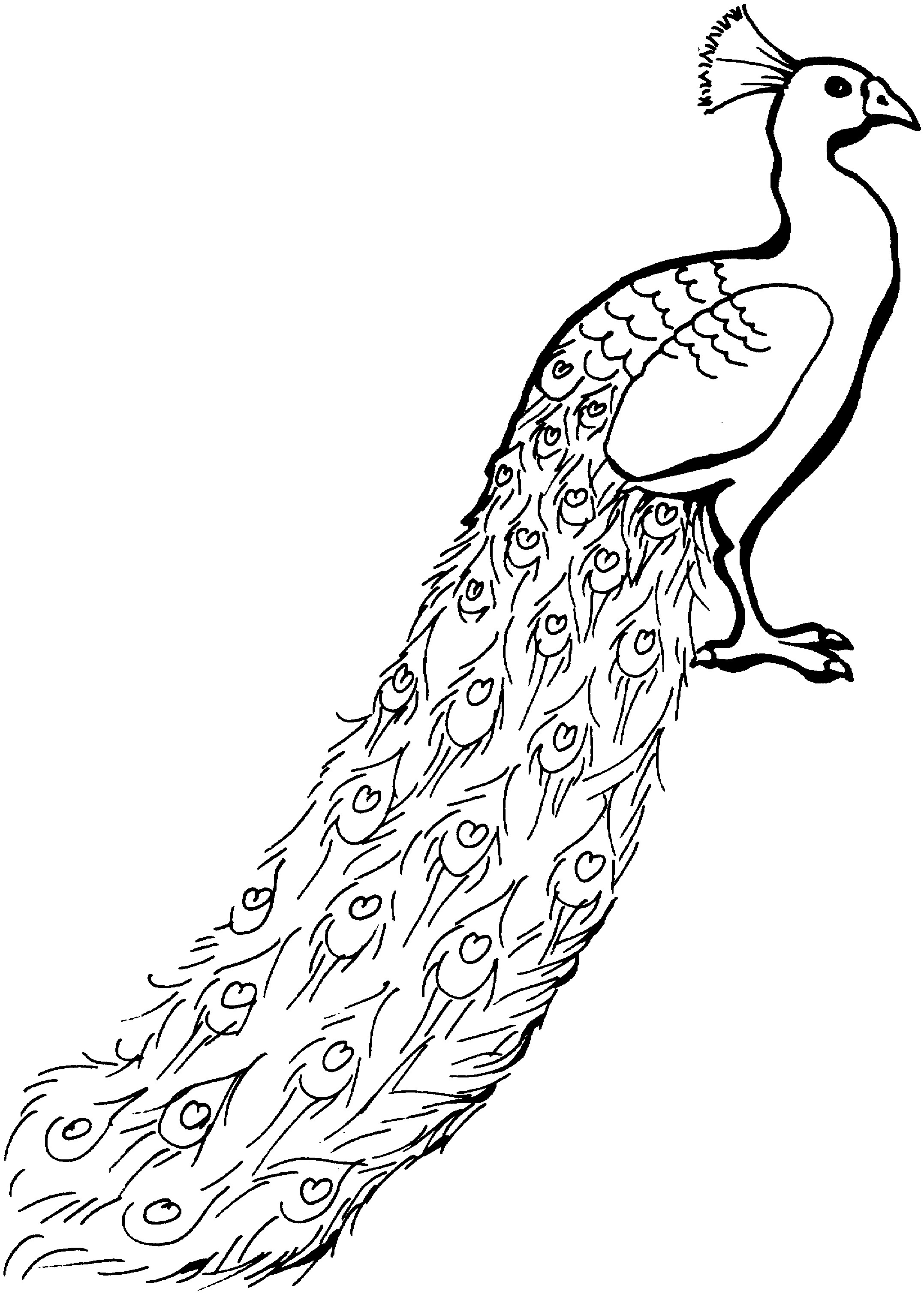 Free Peacock Coloring Pages Coloringme Com
