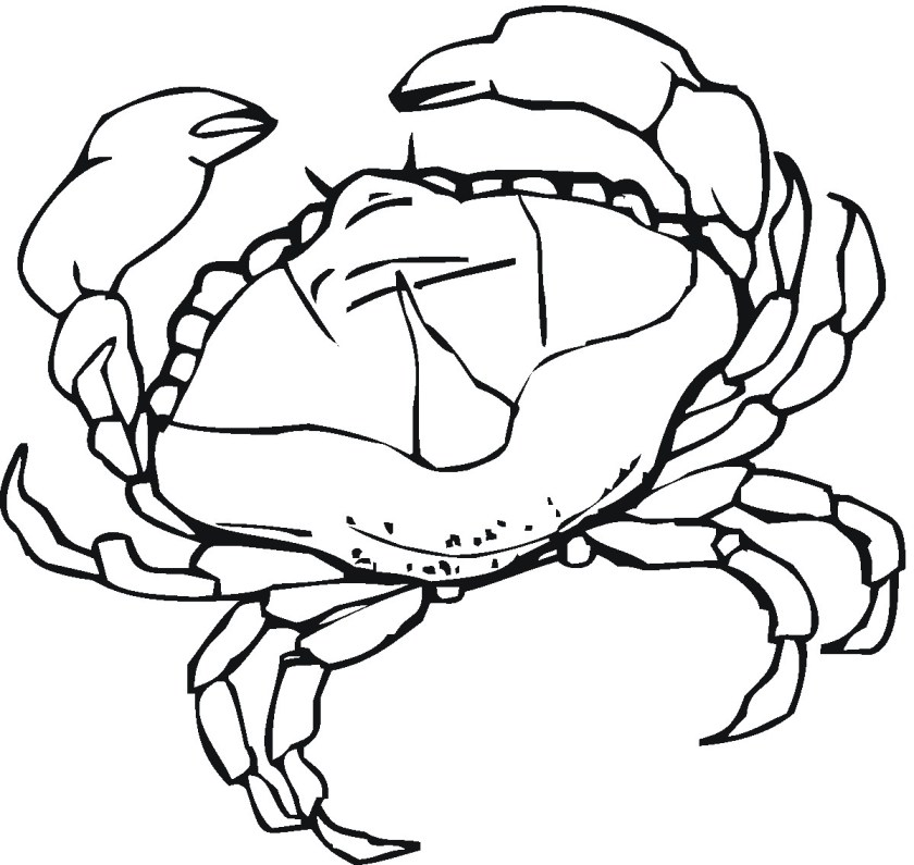baby crab dora coloring pages and printable coloring pages