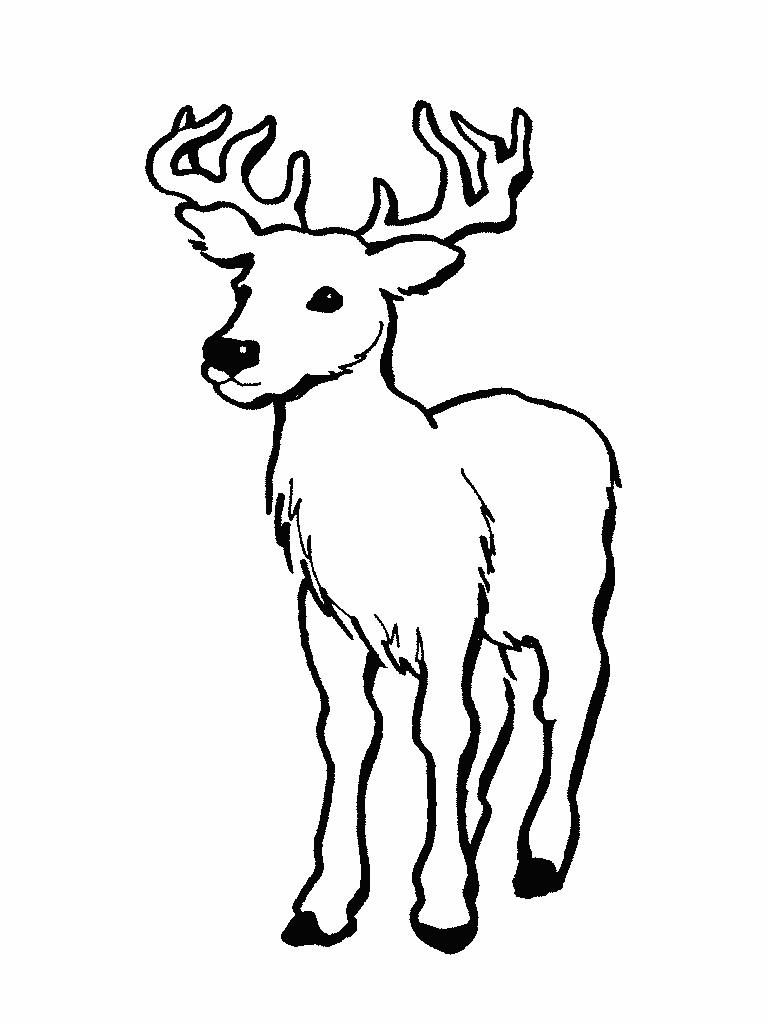 Printable Deer Coloring Pages Coloringme Com