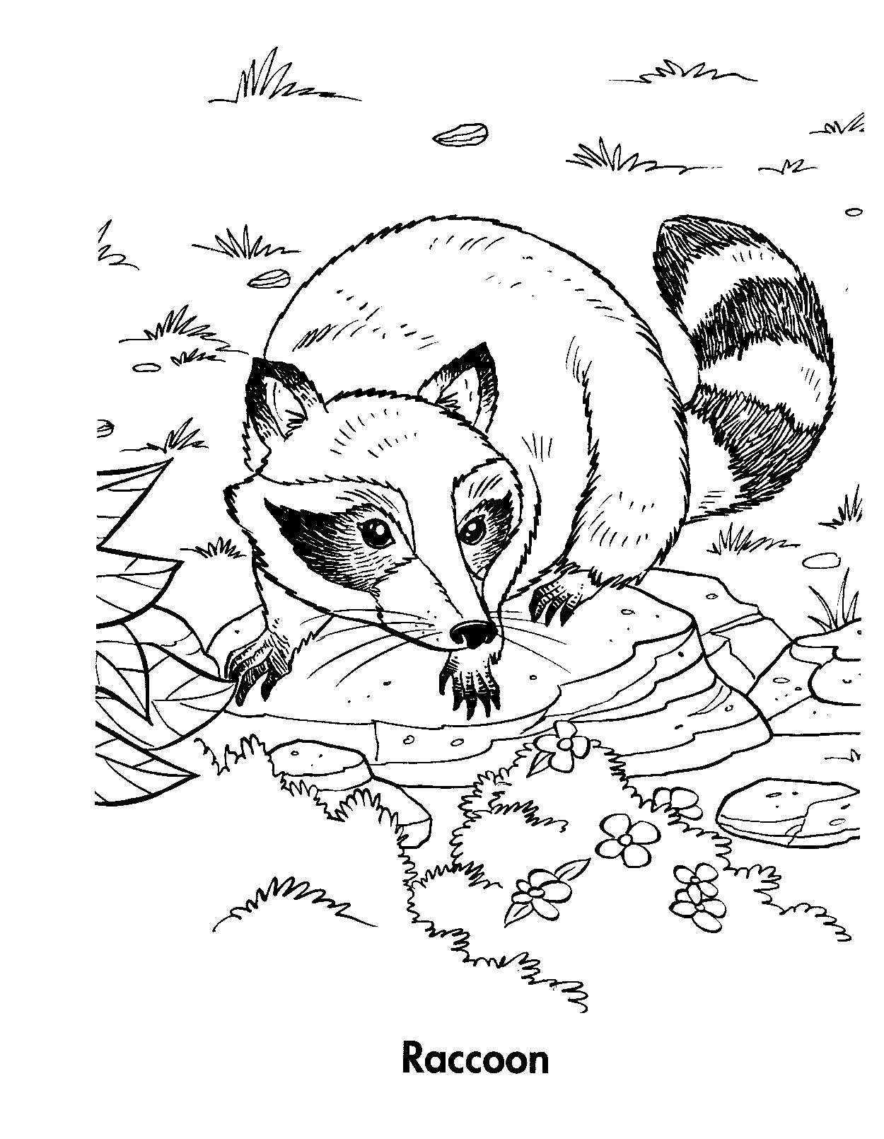 Cartoon Raccoon Coloring Page Coloring Pages