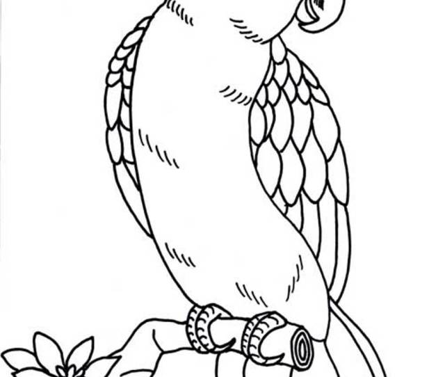 Printable Parrot Coloring Pages Coloringme Com