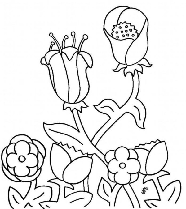 Preschool Flowers Coloring Pages