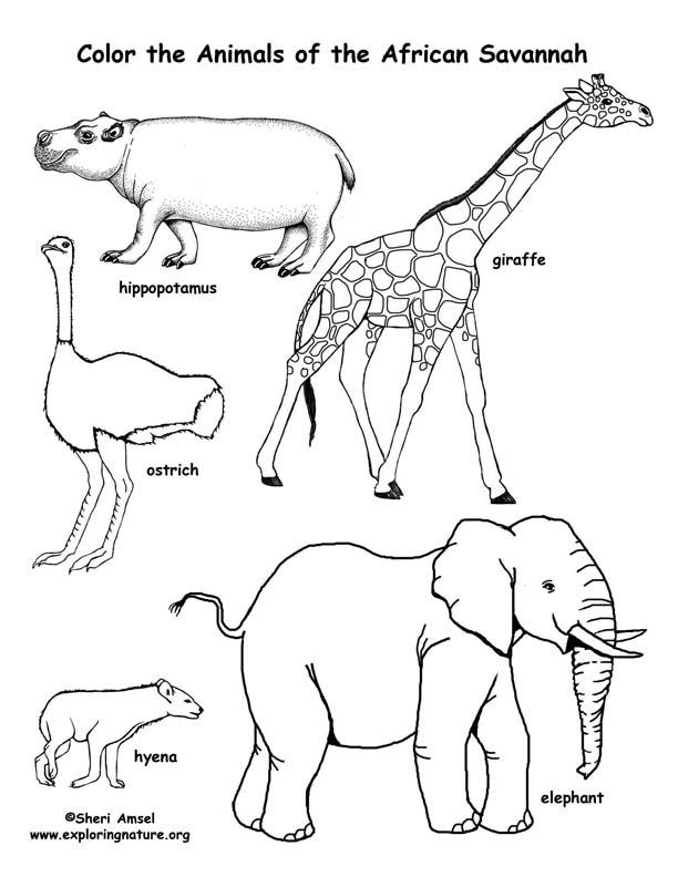 African Grassland Animals