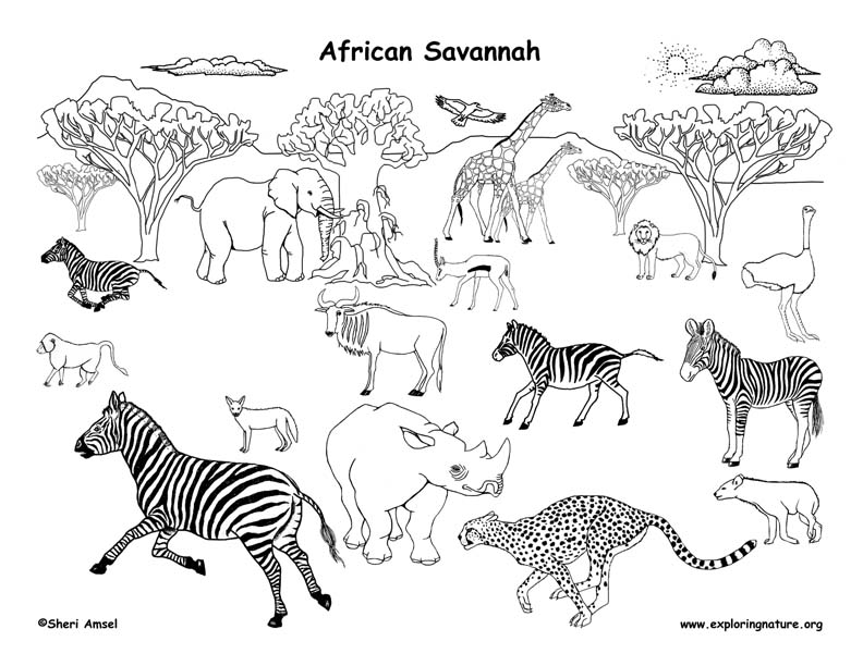 African Grassland Animals (Labeled)