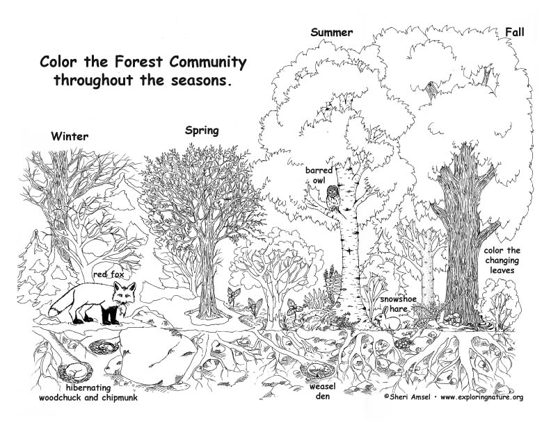 Forest Community Throughout the Year