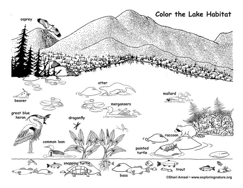 Lake Habitat and Wildlife