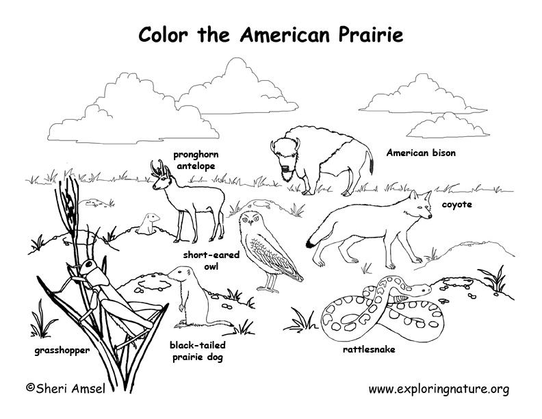 American Prairie Animals (Labeled)