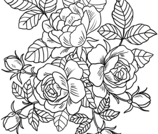 Beautiful Roses Coloring Page Free Printable Coloring Pages For Kids
