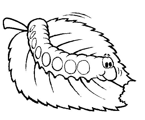 bug coloring page # 36