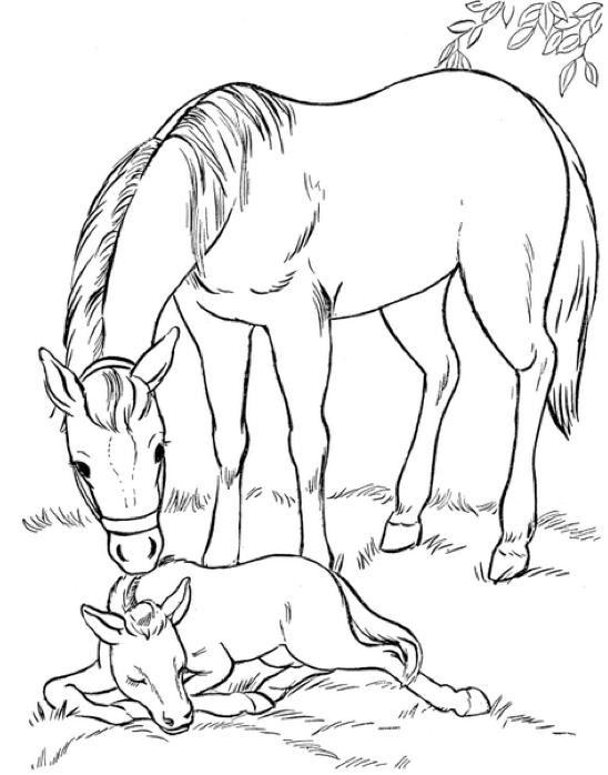 Mare And Foal Coloring Page Amp Coloring Book