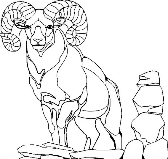 Mountain Goat Coloring Page & Coloring Book
