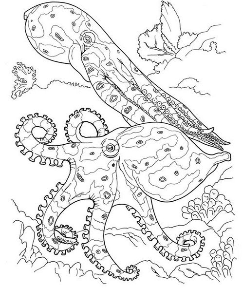 squid coloring pages for kids # 34