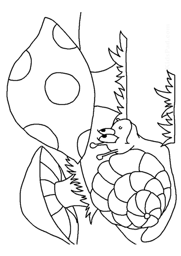 mushroom coloring pages books