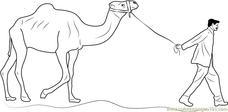 Man Leading Camel Coloring Page Free Camel Coloring