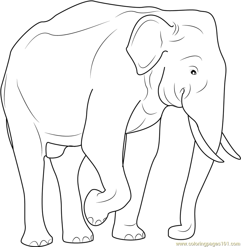 Indian Elephant Coloring Pages Design Pictures to Pin on