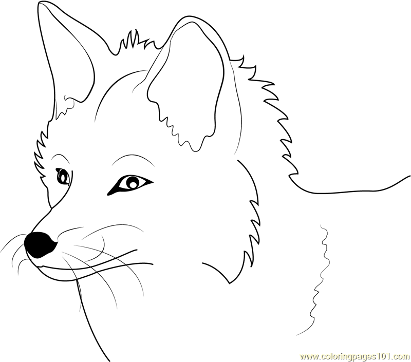 Fox Face Outline Coloring Coloring Pages