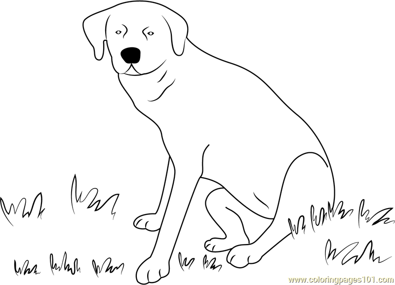 Labrador Dog Sitting Drawing Sketch Coloring Page