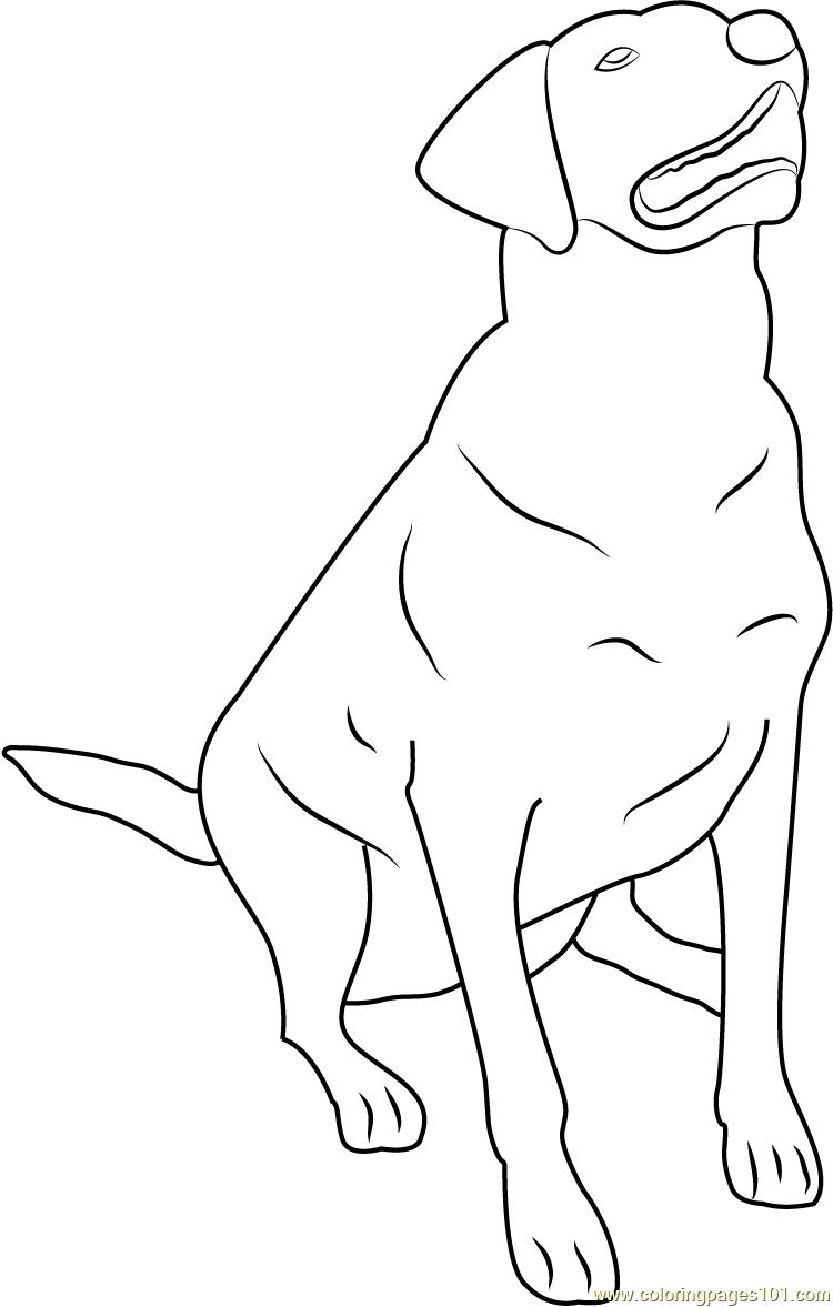 Labrador Dog Coloring Pages Sketch Coloring Page