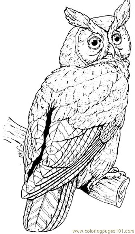 Great horned owl Coloring Page  Free Owl Coloring Pages