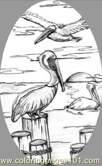 Pelican 1 Coloring Page Free Pelican Coloring Pages