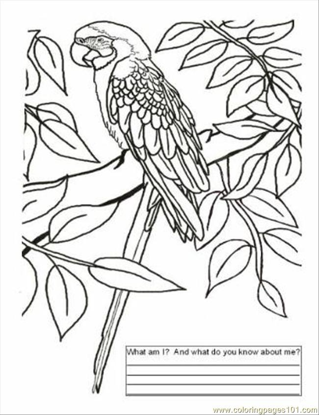 Brazil Coloring Pages To Download And Print For Free