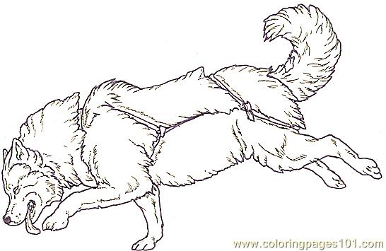 Dog Sled Coloring Pages Page Of An Eskimo With A And