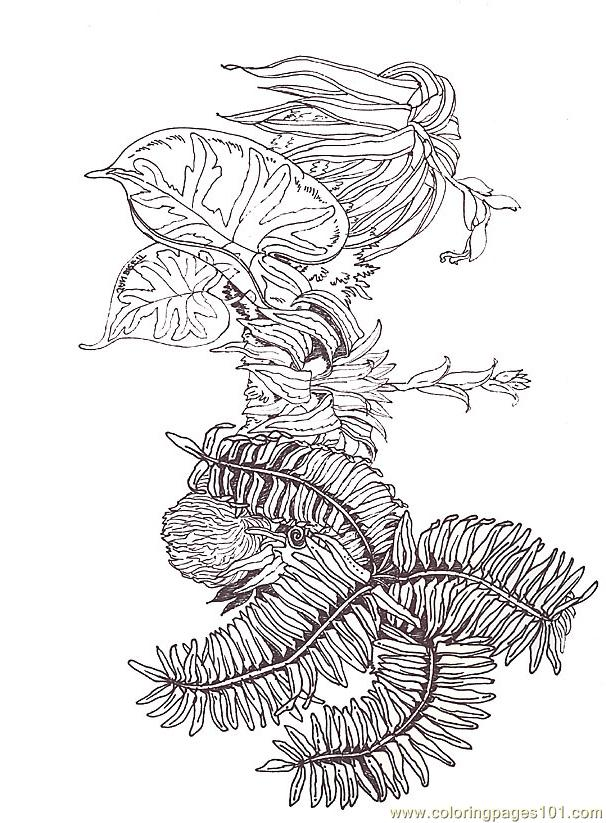 Coloring Pages Coloring Fern Branch Segment Reverse