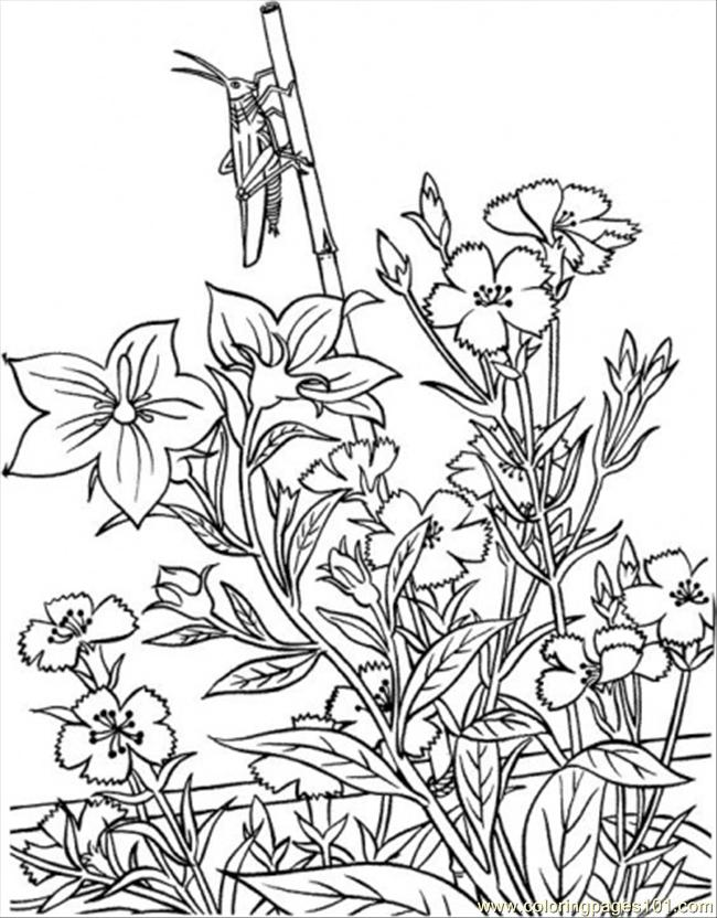 1000+ images about Coloring pages Flowers on Pinterest