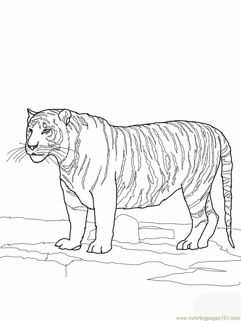 Clemson Paw Print Coloring Page Coloring Pages