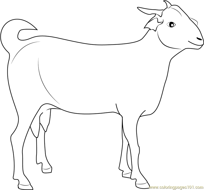 G For Goat Colouring Pages Sketch Coloring Page
