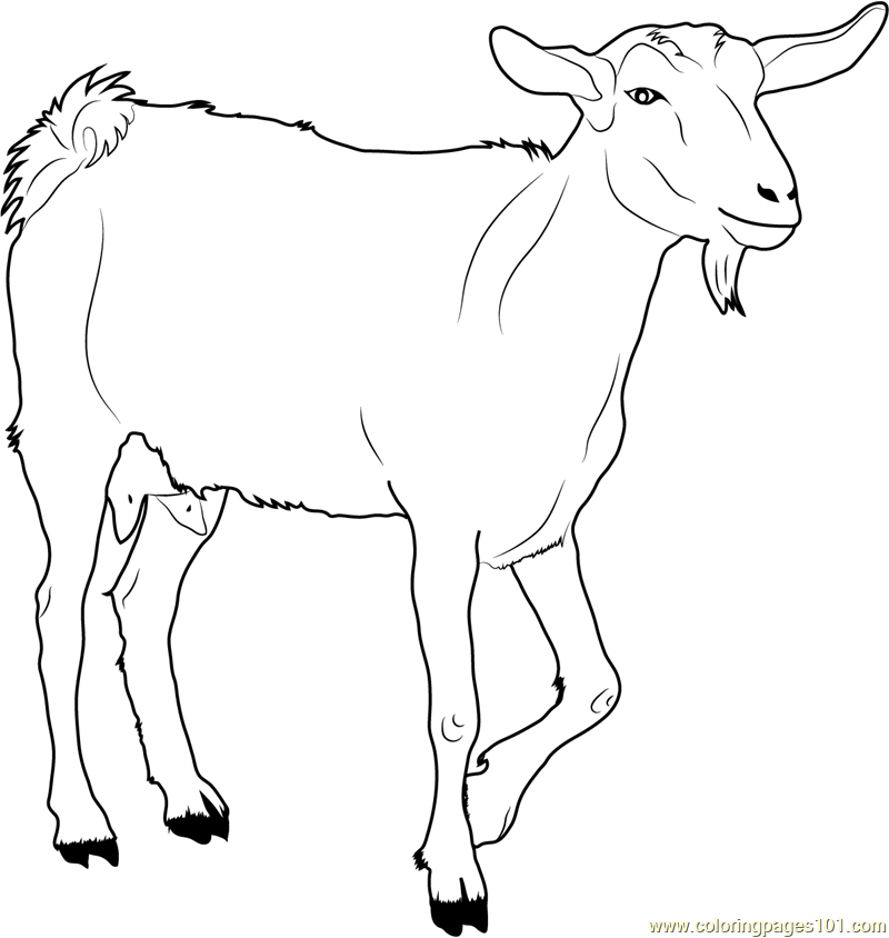 Goat Pages Coloring Pages