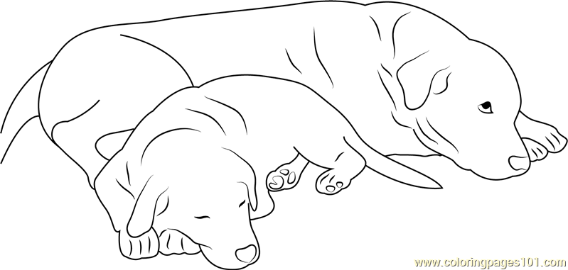 Dog Sleeping With Mother Coloring Page Free Dog Coloring