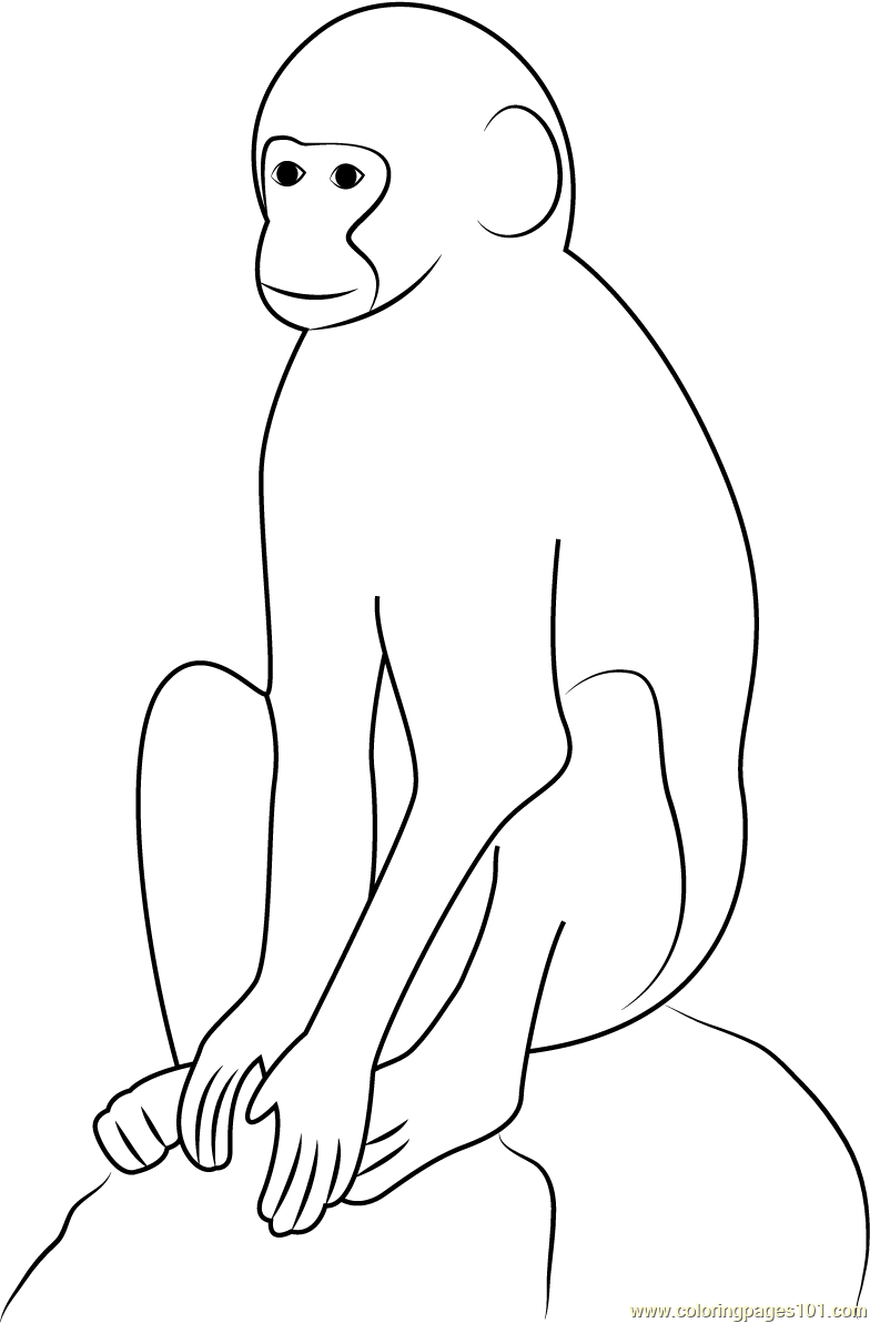 Vervet Monkey Coloring Page Free Monkey Coloring Pages