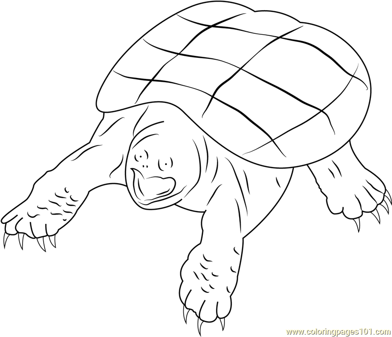 Snapping Turtle Coloring Page Free Turtle Coloring Pages
