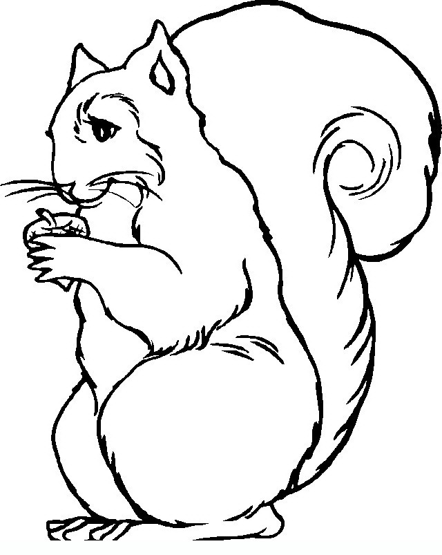 squirrel Adult coloring pages