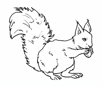 squirrel_2 Adult coloring pages