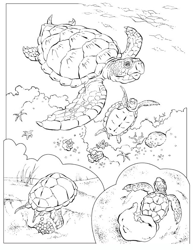 fishes_4 Adult coloring pages
