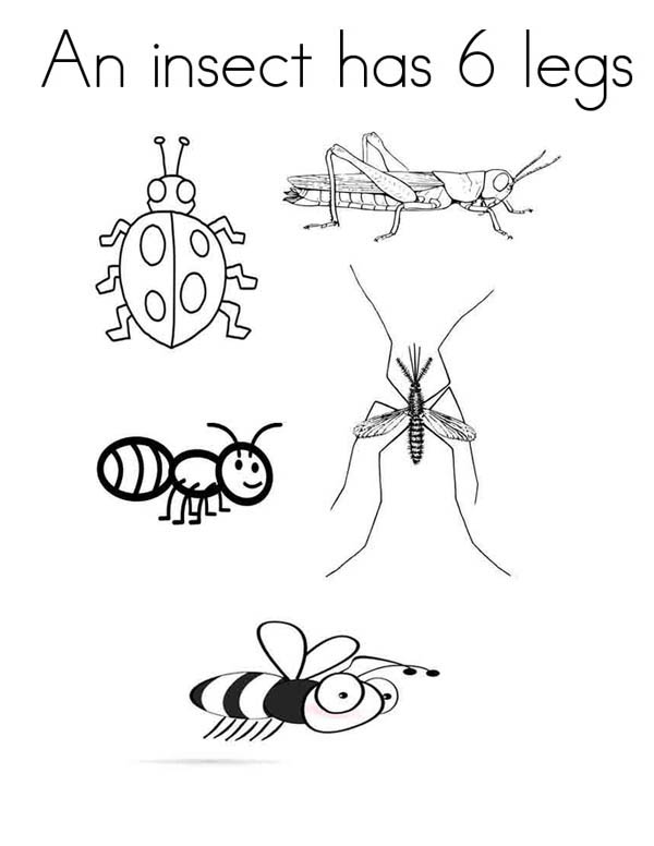 An Insect Has Six Legs Coloring Page : Coloring Sky