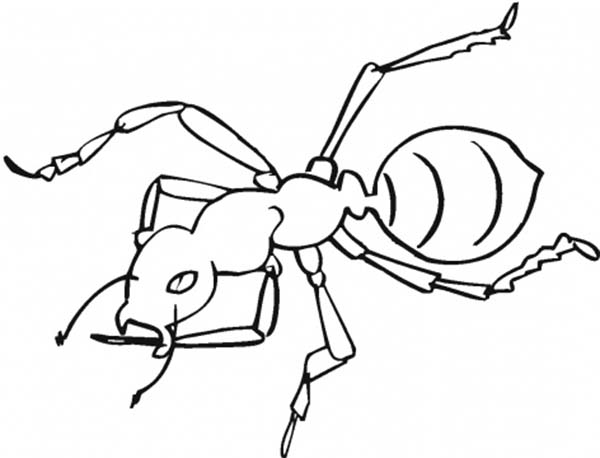 Awesome Worker Ant Coloring Page : Coloring Sky