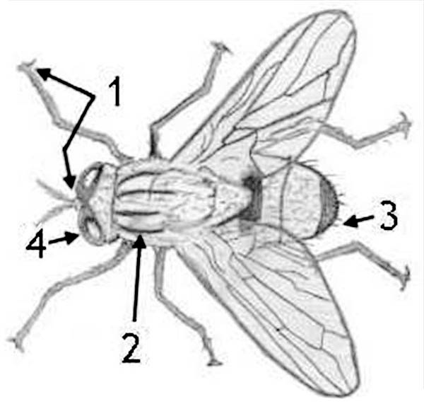 Diagram Of Fly Coloring Page : Coloring Sky