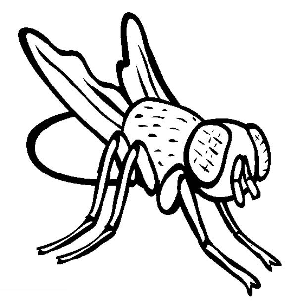 Disgusting Fly Coloring Page : Coloring Sky