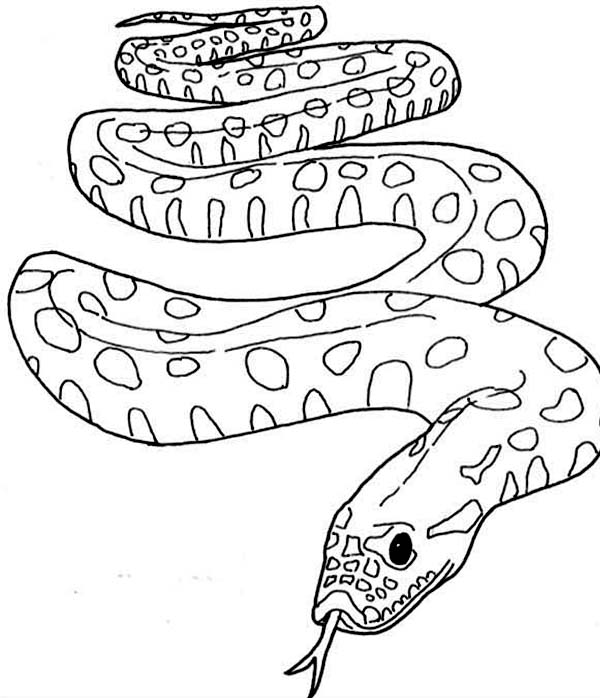 Famous Snake From Amazon Anaconda Coloring Page : Coloring Sky