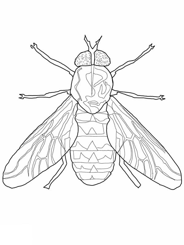 Fly Coloring Page For Kids : Coloring Sky