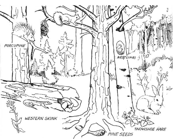 Forest Where Animals Live Coloring Page : Coloring Sky