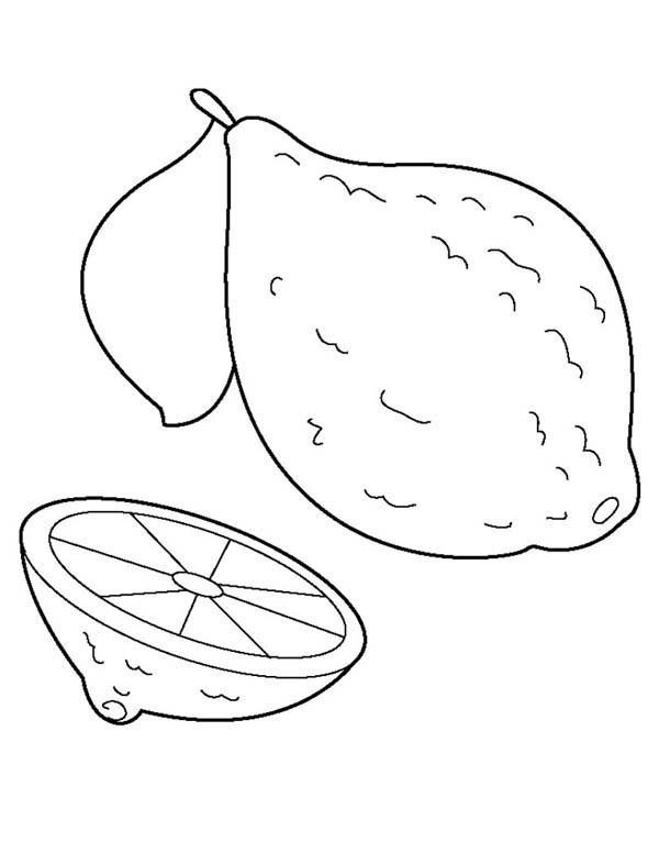 Lemon Fruit Coloring Pages Sketch Coloring Page