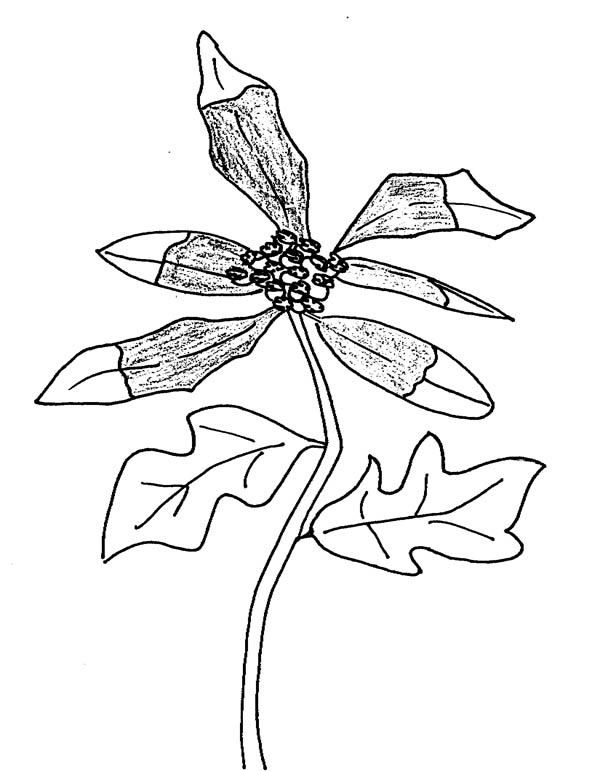 Growing Plants Image Coloring Page : Coloring Sky