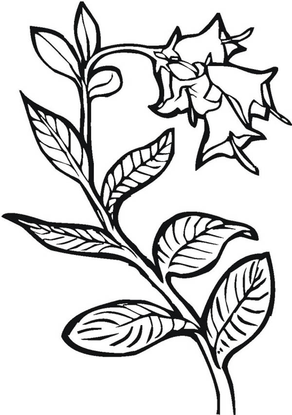 Growing Plants Picture Coloring Page : Coloring Sky
