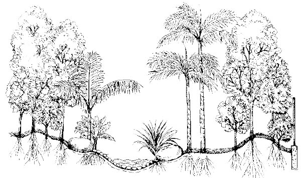 Growing Plants In Rain Forest Coloring Page : Coloring Sky